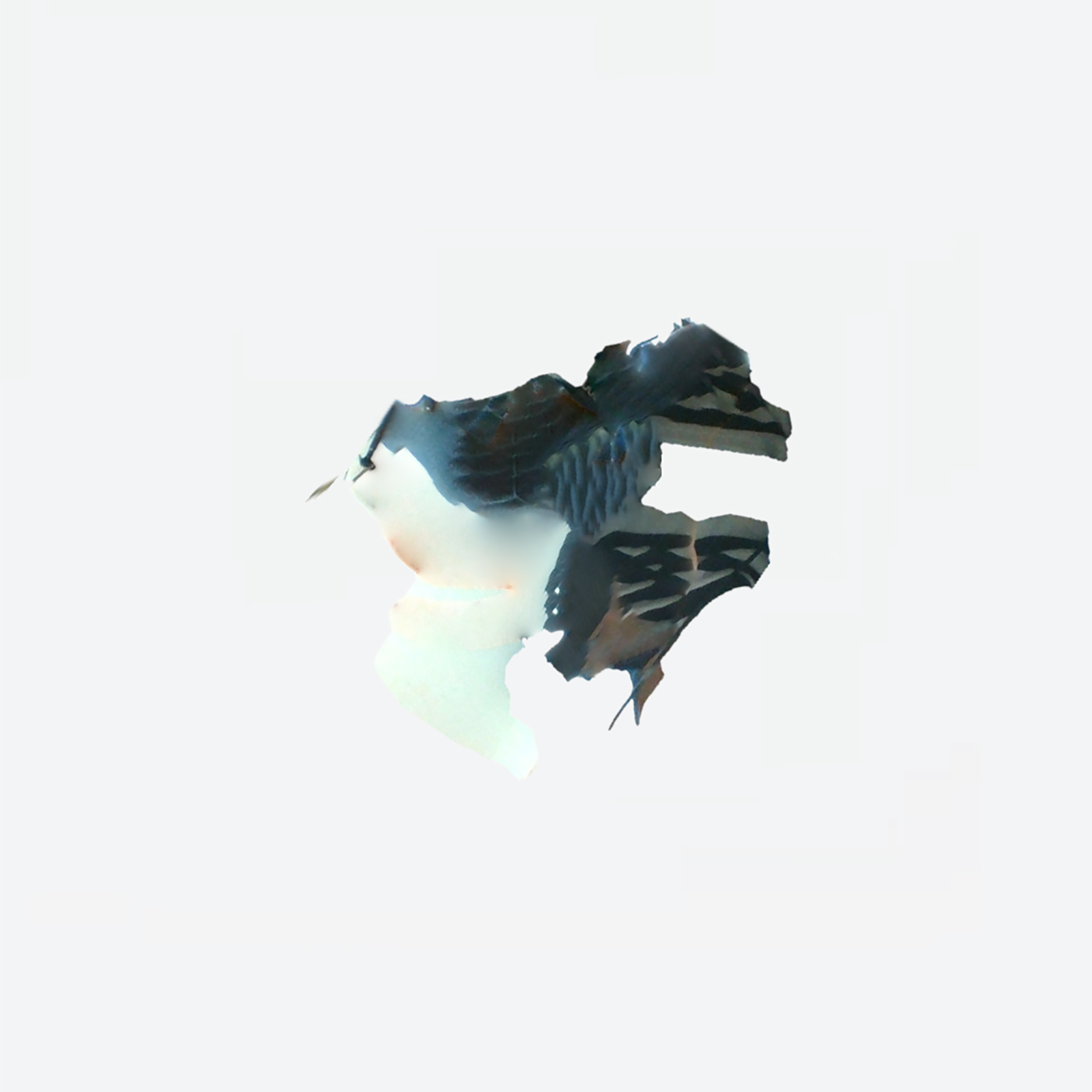 Nagisano-Lotus_cover