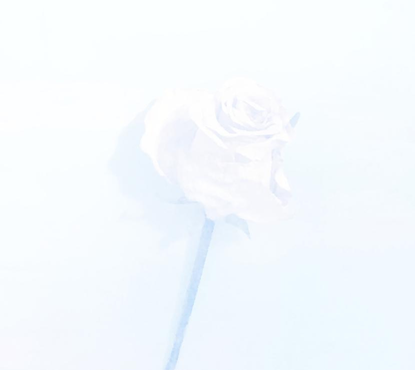 Sachi Kobayashi /Ephemeral Beauty